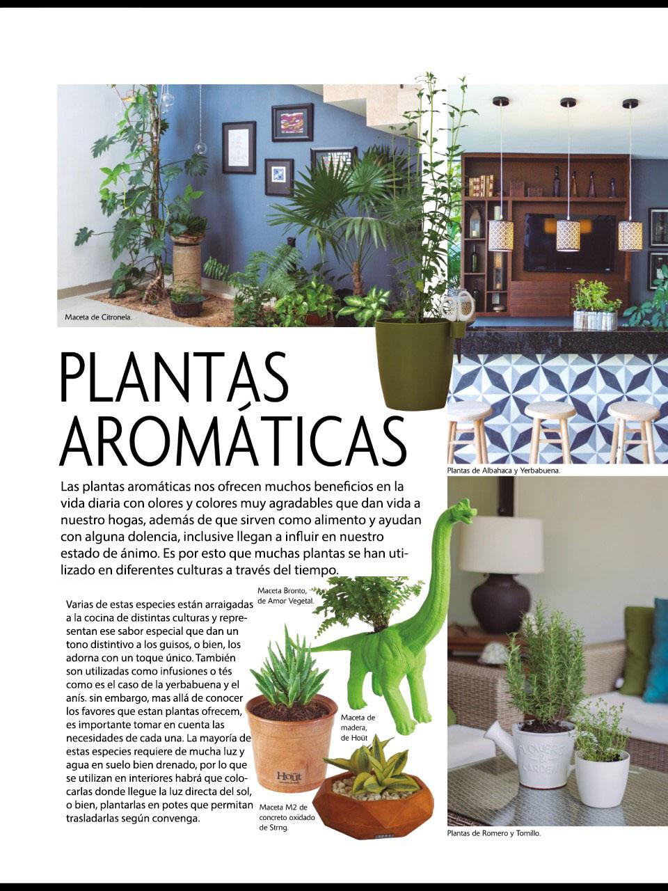 Plantas aromaticas interior fabulous romero semillas - Plantas aromaticas interior ...